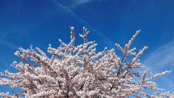 Dia de primavera em Paris