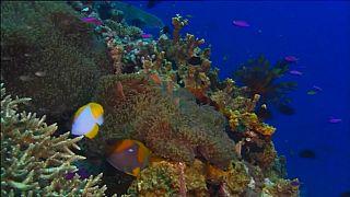 Parte dos corais da Grande Barreira de Coral australiana desapareceu