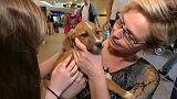 شاهد: كلاب يونانية شاردة تجد من يتبناها في الدنمارك