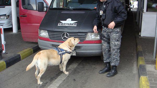 Rumänien plant Rente für Polizeihunde und -pferde