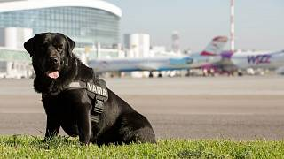 В Румынии служебным собакам обещают пенсию