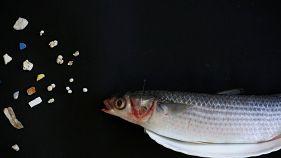 Plastic found inside a fish