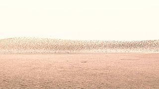 Перелетные птицы в устье реки Ялуцзян