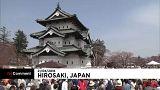 Cseresznyefa-virágzás Japánban