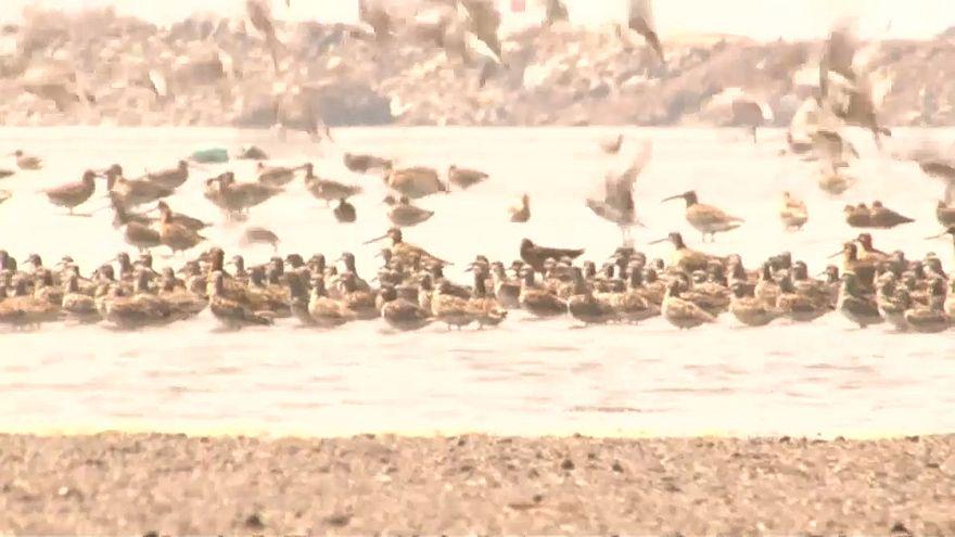 Dezenas de milhares de aves migratórias na China
