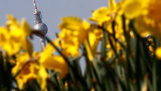 18,6 Milliarden jährlich: Gartentrend schafft Riesenmarkt
