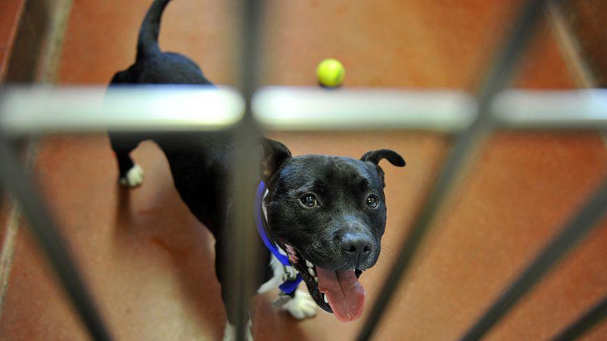 """Mahnwache für """"Chico"""": Der Hund hatte 2 Menschen totgebissen"""