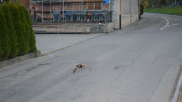 Ducking the police: Swiss speed camera nets unusual culprit