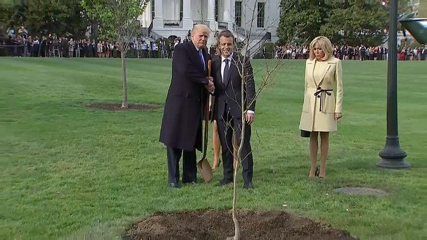 Визит Макрона в США: дуб как символ дружбы