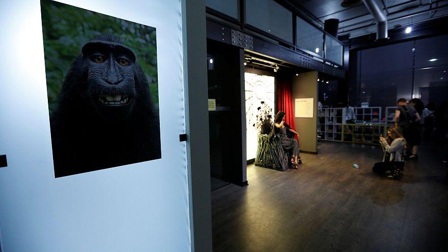 """""""لا وصي على حقوق الملكية الفكرية لصور """"سيلفي"""" الحيوانات"""""""