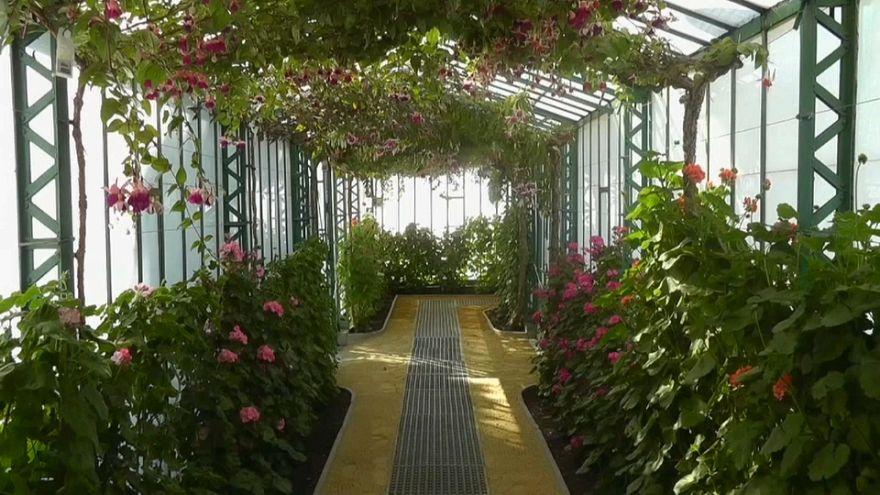 Королевские оранжереи в Лакене