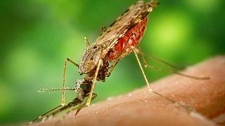 روز جهانی مالاریا و بحران بیماری در ونزوئلا؛ مبتلایان ۵ برابر شدهاند