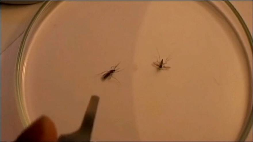 Immer mehr Malaria-Erkrankungen