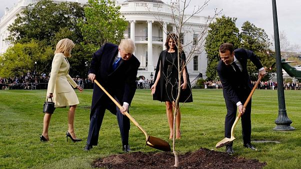 Los mejores memes de Macron y Trump plantando un árbol