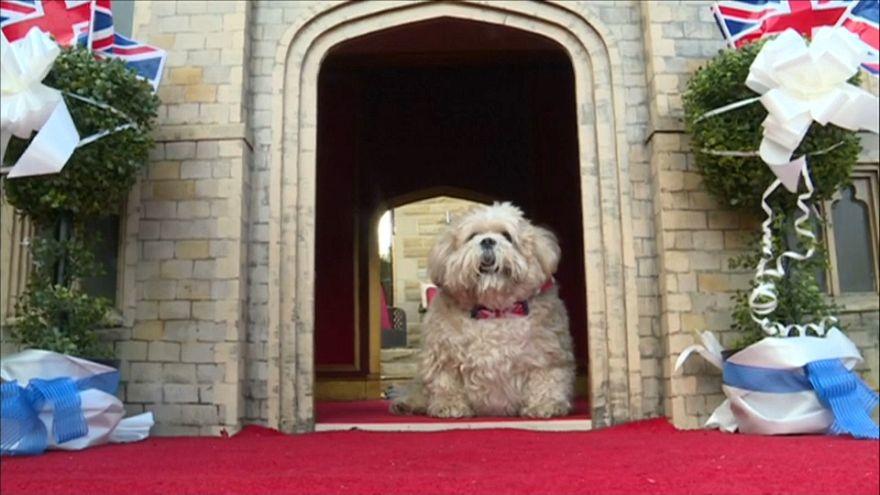 شاهد: كلب مدلل يحصل على قلعة ويندسور كمأوى له