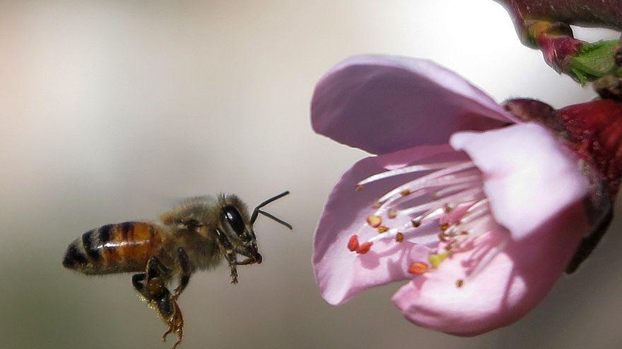 """Trois """"pesticides tueurs d'abeilles"""" bannis par l'UE"""