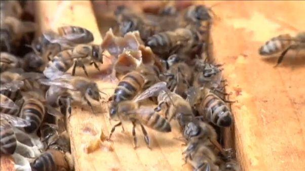 EU verbietet wegen Bienensterben drei Insektenmittel