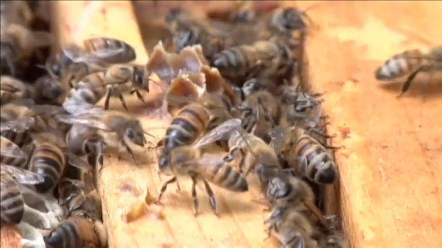 Abelhas expostas a menos inseticidas até ao final do ano