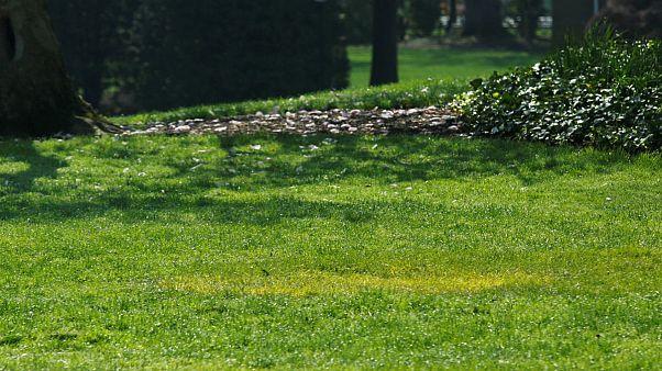 درختی که ماکرون و ترامپ در حیاط کاخ سفید کاشتند چه شد؟