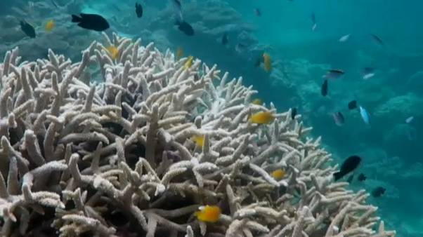 Austrália investe milhões na proteção de Corais
