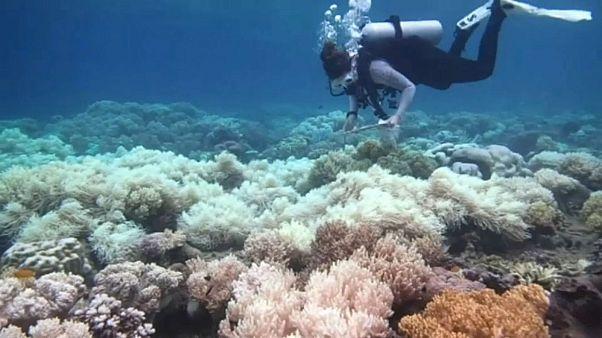 Saving Nemo