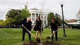 Macron'un Beyaz Saray'a diktiği ağaç karantinada