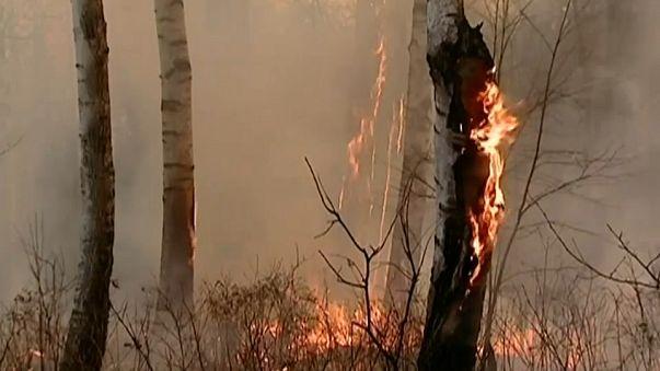 В России не стихают лесные пожары