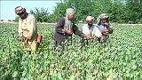 Afghanistan, il cuore del traffico mondiale di oppio