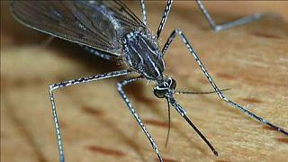 Attention au moustique tigre en France