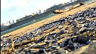شاهد: قناديل البحر السامة تجتاح شواطئ برشلونة