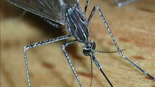 Σε συναγερμό για το κουνούπι-«τίγρης»