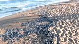 Βαρκελώνη: Μέδουσες έκαναν «έφοδο» στις ακτές