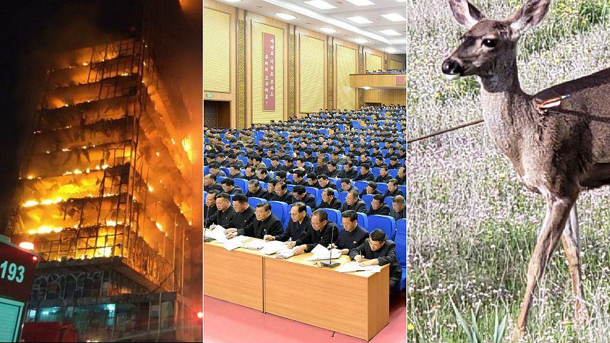 Fire in Sao Paulo, North Korean meeting, deer injured
