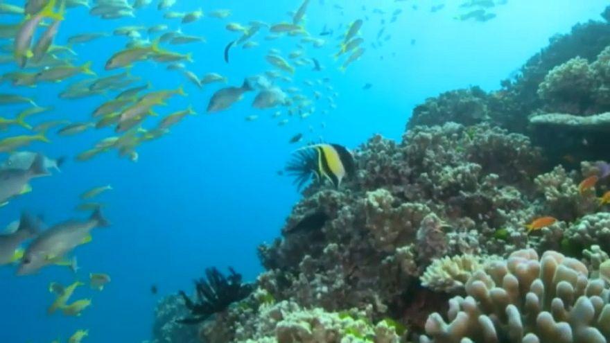 Lluvia de millones para salvar la Gran Barrera de Coral
