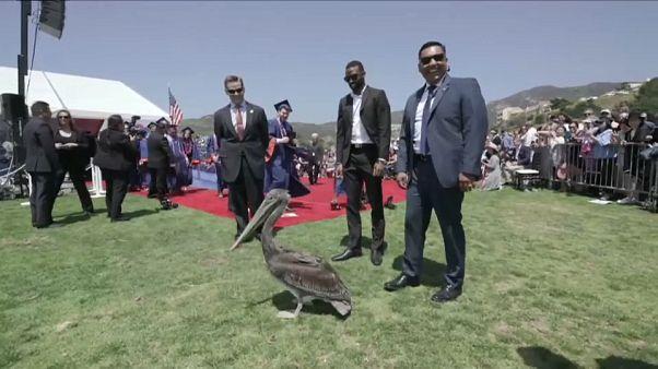 Die Security bestaunt den Pelikan.