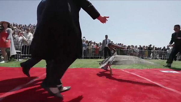 Pelican crashes US university graduation