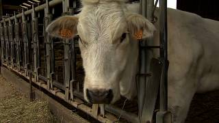 The EU's smaller farmers fear subsidy cuts in the CAP budget review