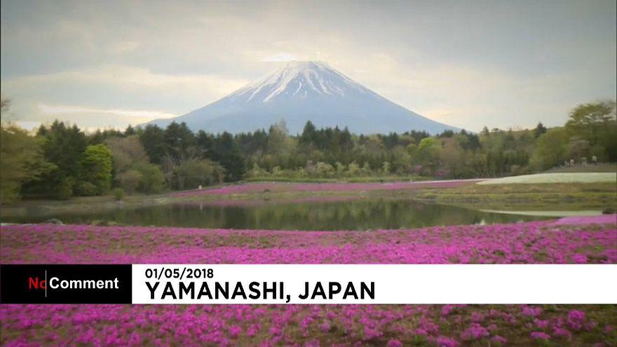 El paisaje japonés se tiñe de rosa