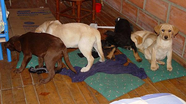 Vet charged in US for smuggling heroin in puppies' bellies