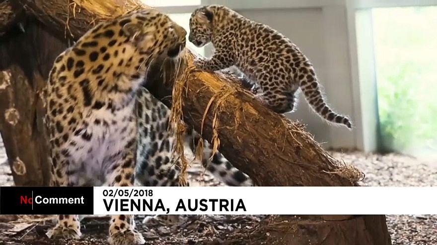 Aumenta la familia del Zoo de Viena