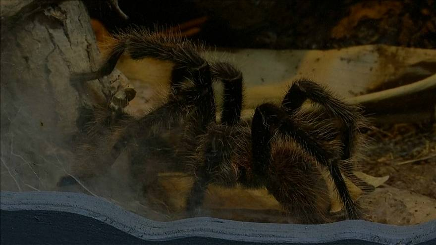 Arachnophobes learn to love spiders