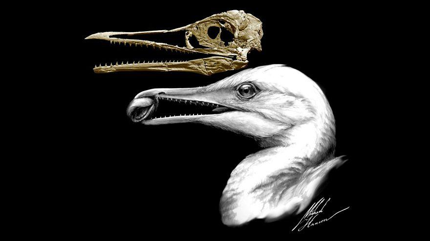 جمجمة طائر تكشف لغز تطور الديناصورات