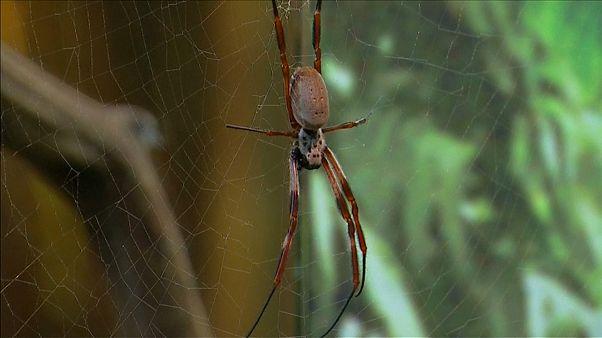 Spinnenphobie: Londoner Zoo hilft Betroffenen