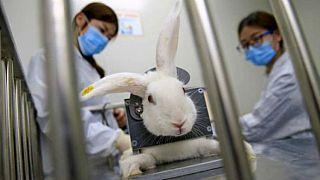 AB kozmetik için hayvan testlerinin dünya çapında yasaklanmasını talep ediyor