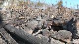 Schäden durch Waldbrand in der Slowakei