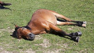 جنجال کشتار دهها اسب متعلق به کولبران