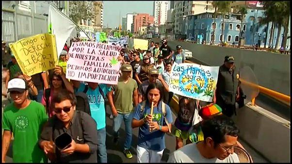"""Les """"Marches de la marijuana"""" en Argentine et au Pérou"""