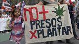 Argentinier fordern Legalisierung von Marihuana