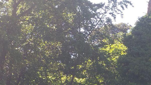 Einen Tag lang im Wald vermisst: Die drei 4-Jährigen sind wieder da!