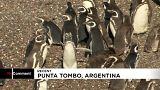Punta Tombo, el paraiso de los pingüinos